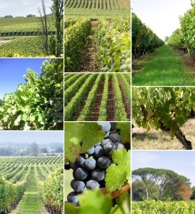 images-of-a-vineyard
