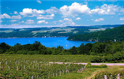 Finger-Lakes-vineyard