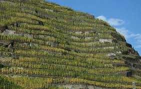 Mosel Vineyard