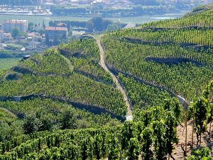 northern-rhone-vineyard
